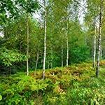 investir-bois-forêts